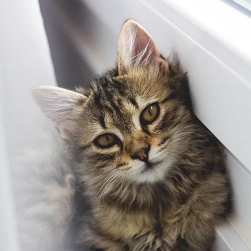 adoptable cats