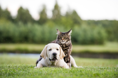 Dog and Cat Adoption