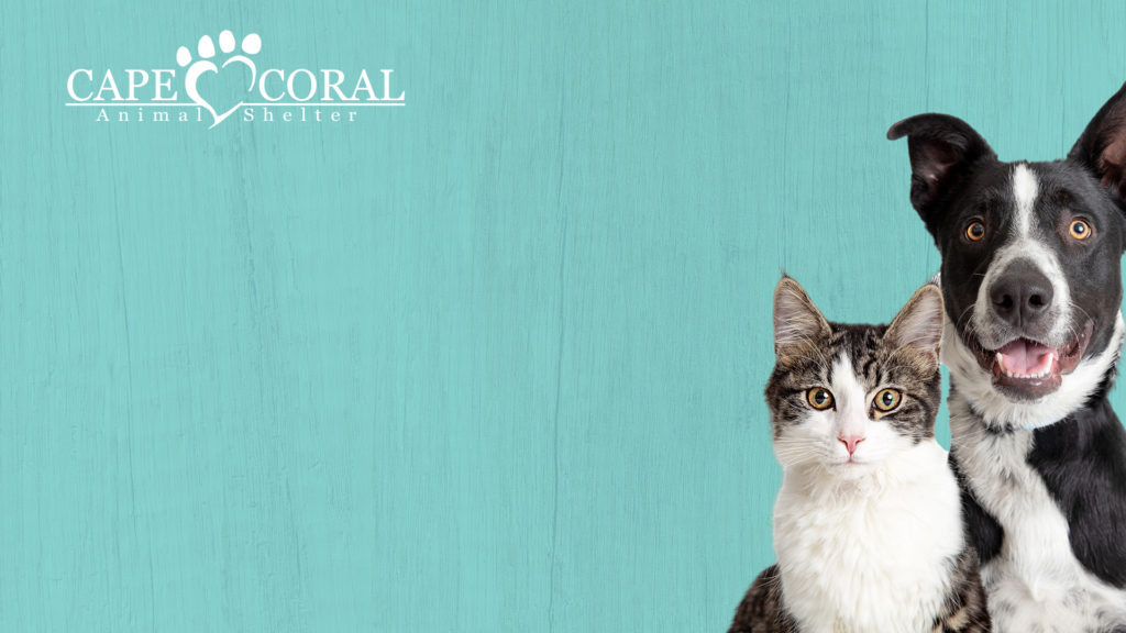 CCAS Teal Virtual Background