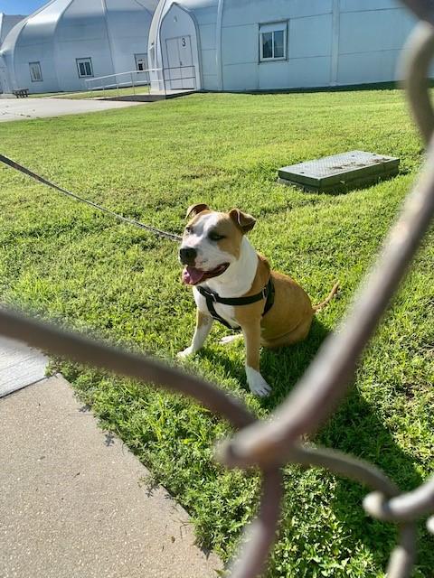 Cell Dog Program at CCAS