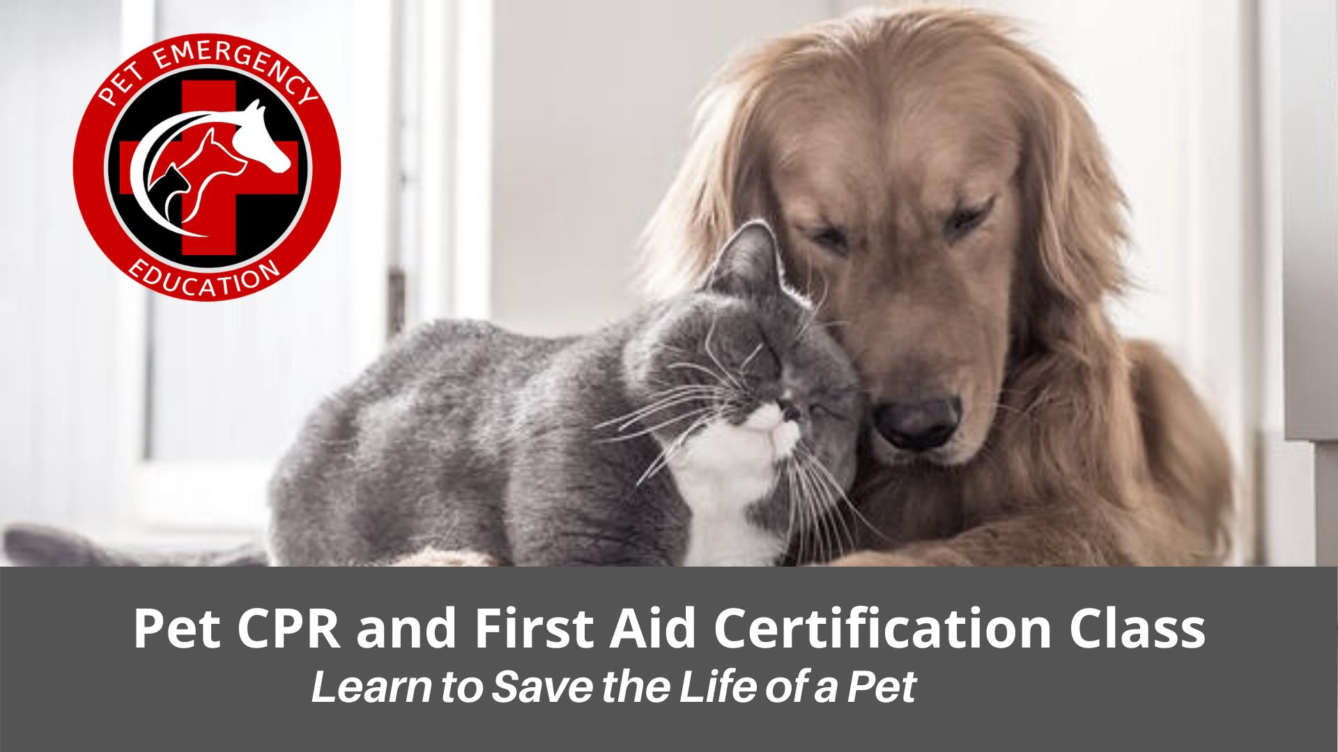 Pet CPR and First Aid Certification class and Fundraiser